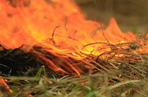 Why We Did A Prescribed Burn And What We Learned.