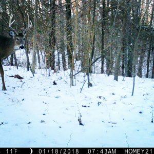 Our Late Season Trail Cam Strategy