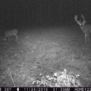 Identifying Bucks From Trail Cam Pics in an Encounter